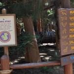 redwood12