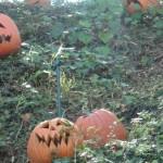 DL Haunted Mansion Holiday  Pumpkins