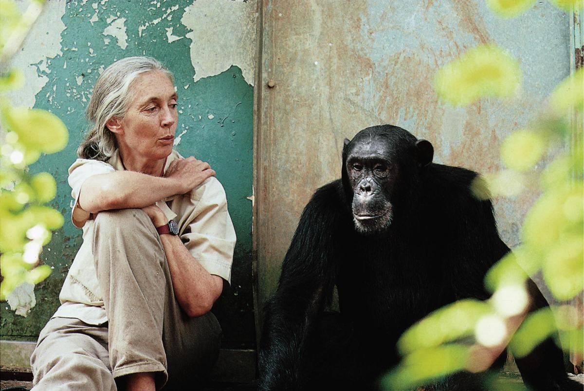 "Dr. Jane Goodall Hosts ""Chimpanzee"" Premiere at Walt Disney World"