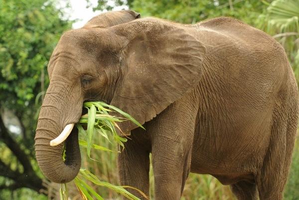 elephant (600×401)