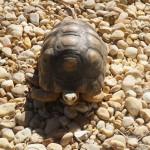 11_Sanaa_Tortoise